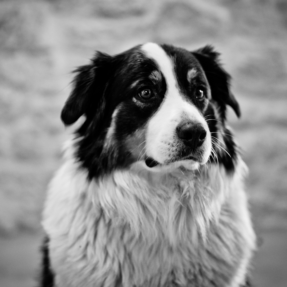 Portrait von Lulu